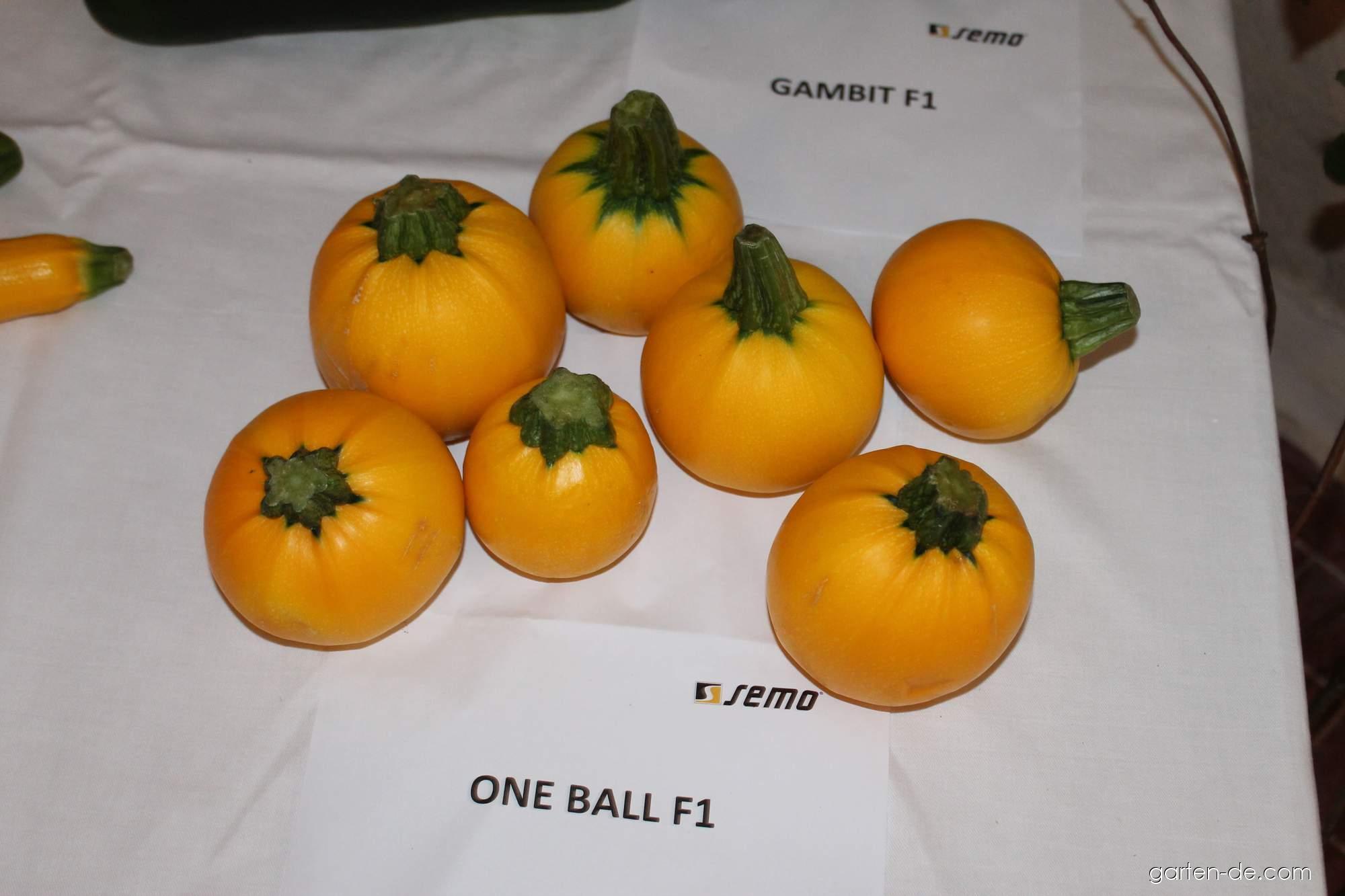 Tykev obecná - cuketa One Ball (Cucurbita pepo)