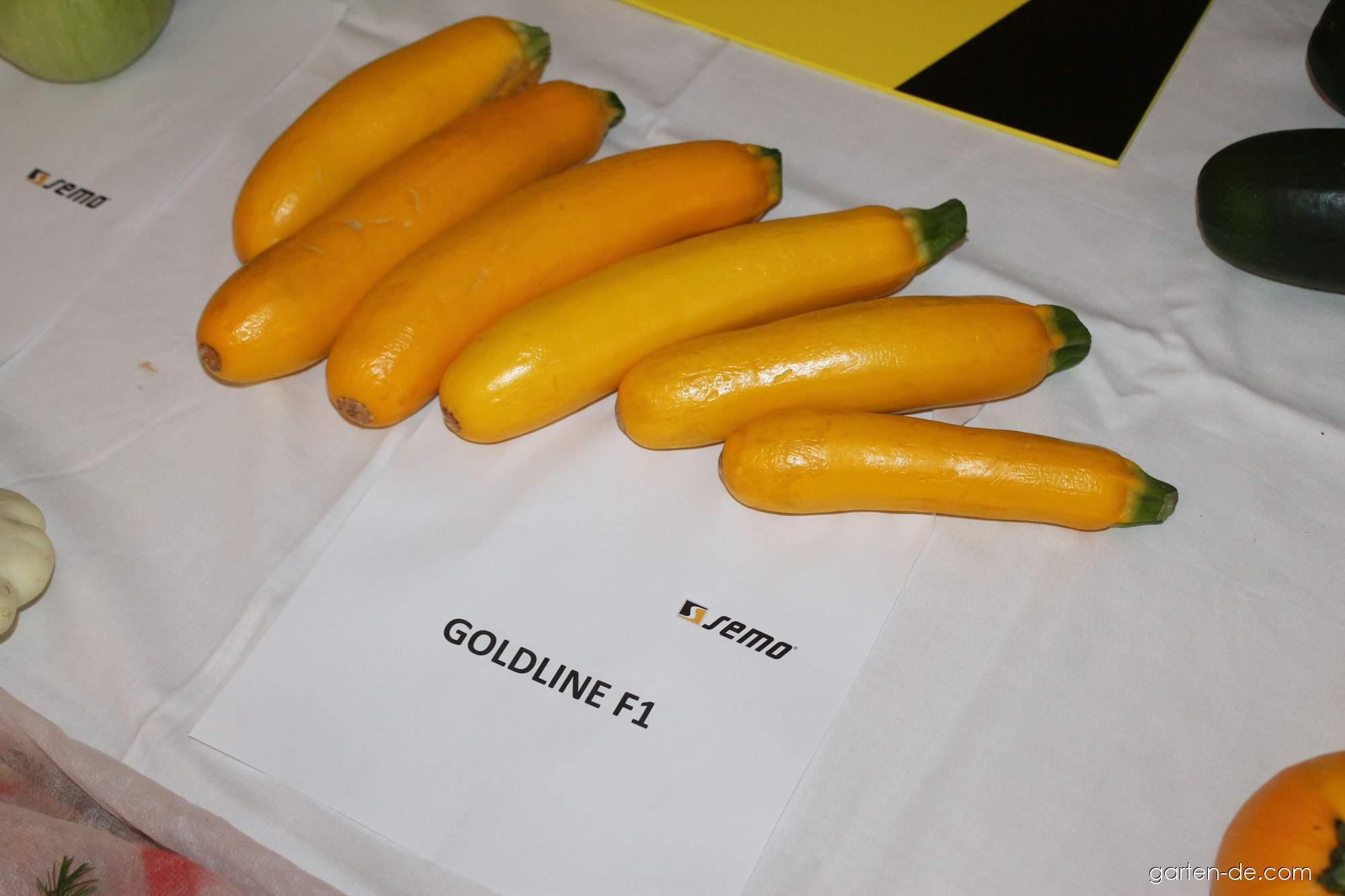 Tykev obecná - cuketa Goldline (Cucurbita pepo)