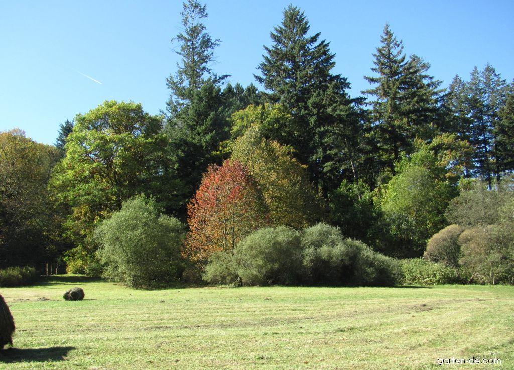Arboretum Křtiny - krásně sesazené dřeviny