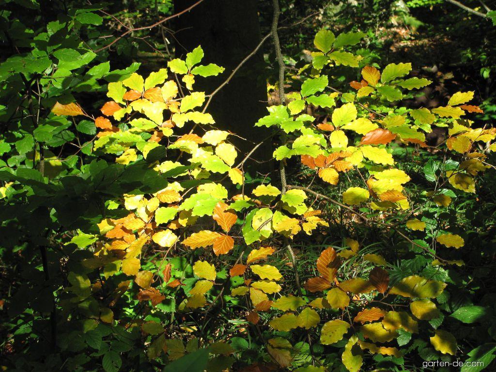 Arboretum Křtiny - podzim, zrcadélko