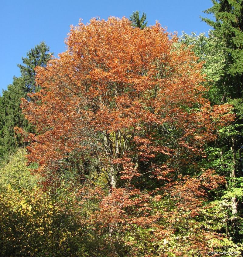 Arboretum Křtiny - stromy svítili v podzimním slunci