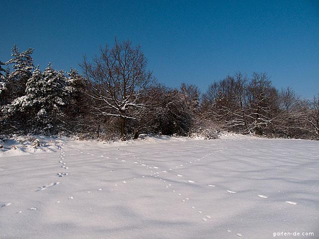 Zimní příroda: okraj lesa