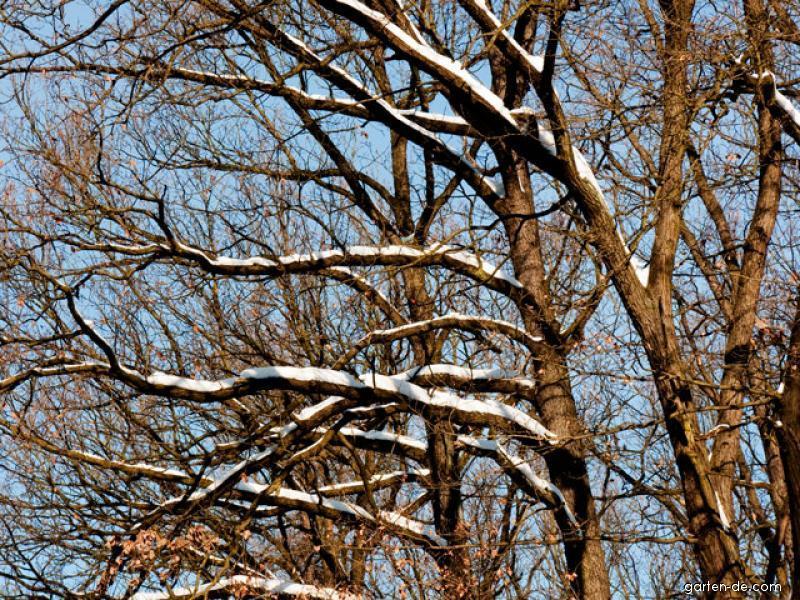 Les v zimě: větve