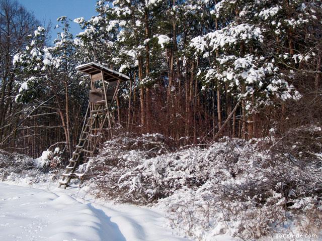 Les v zimě: posed na kraji lesa
