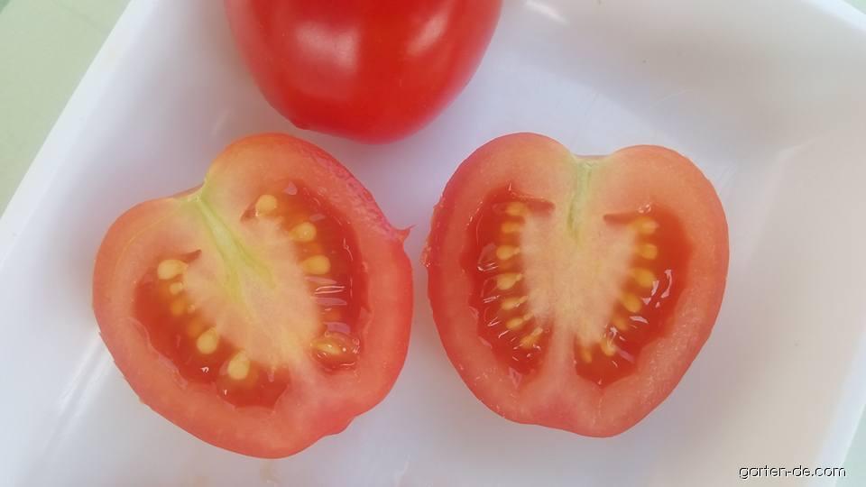Rajče jedlé Gardenberry (Solanum lycopersicum)