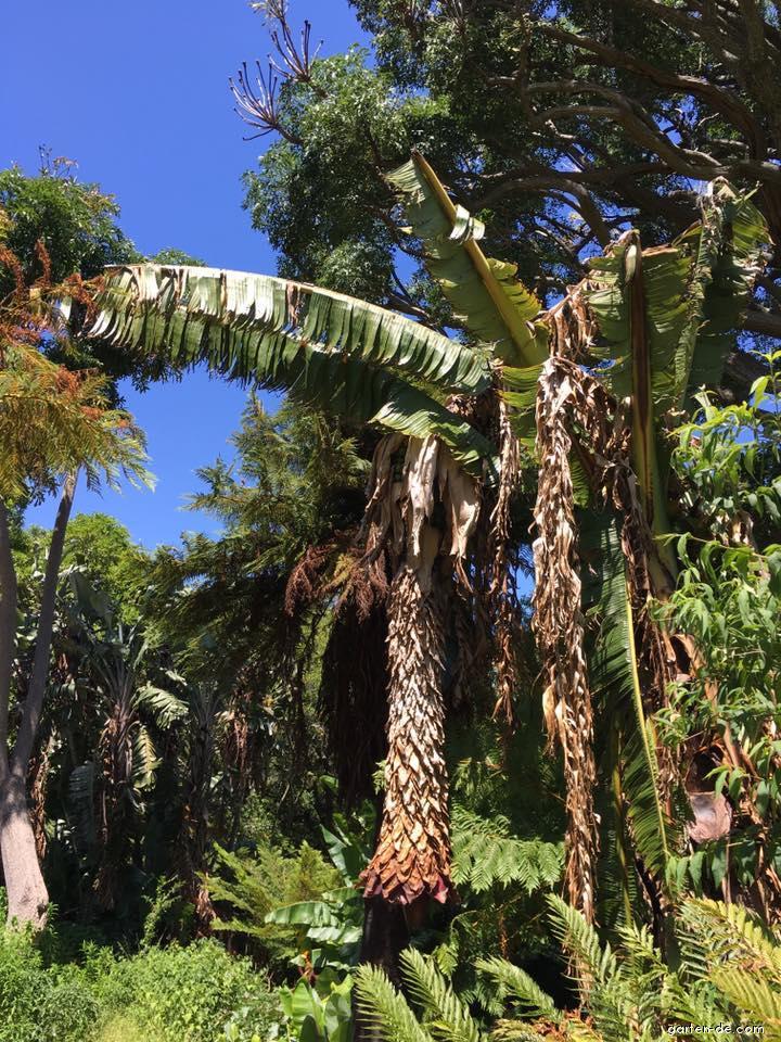 Botanická zahrada Kirstenbosch Botanical Garden