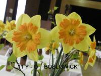 Narcissus  'Boslowick'  Narzisse Blüten